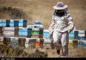 همدان|ایجاد صنایع بستهبندی از نیازهای اساسی تولیدکنندگان عسل در نهاوند است