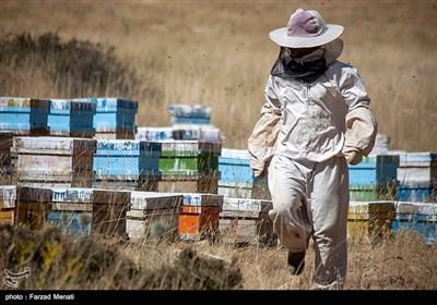 این خانواده توانستند با پرورش زنبور عسل،کاشت گیاهان دارویی، کاشت نخود وعدس راهی برای امرار معاش حلال خود پیدا کنند.