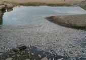 رودخانههای فصلی نیکشهر مورد سلامت اکولوژیکی قرار گرفتند