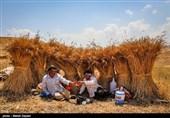 استقبال گندمکاران از سیاست قیمت تضمینی در بورس کالا