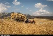 348 میلیارد تومان از مطالبات گندمکاران استان همدان پرداخت شد