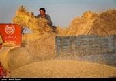 خرید تضمینی گندم در استان سمنان از فردا آغاز میشود