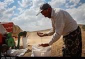 30 هزار تن گندم از استان کردستان به عمان صادر شد