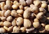 هشدار درباره تبعات رفع ممنوعیت صادرات سیب زمینی و گوجه/ احتمال رشد چند برابری قیمت + سند