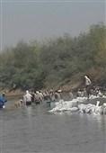 گزارش ویژه تسنیم| بستن رودخانه دز با گونی+فیلم