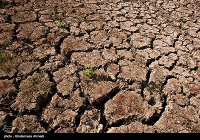 با کاهش بارندگی و هم چنین عدم تخصیص حق آب از سوی مدیریت منابع آبی استان با دلیل کاهش ذخیره سد ،هزار هکتار از زمین های کشاورزی بصورت بایر و 250 هکتار شالیزار نیز خشک شده است .