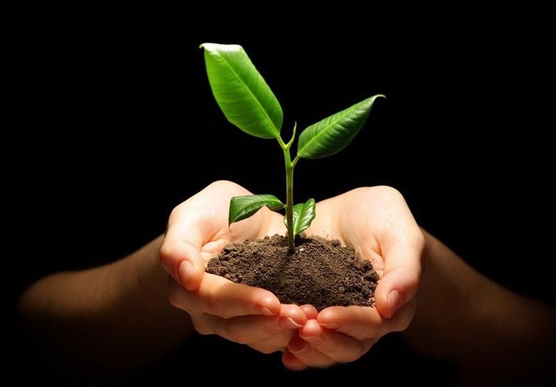 تولید پایلوت بذور هیبرید گوجه فرنگی و فلفل در کشور