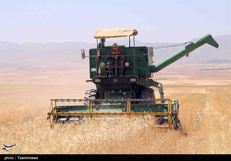 700 میلیارد ریال وجه گندم تحویلی کشاورزان استان بوشهر پرداخت شد