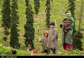 ممنوعیت سفر گردشگران خارجی به کشمیر توسط هند و پاکستان