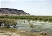 حدود 30 درصد جازموریان حوزه سیستان و بلوچستان آبگیری شد
