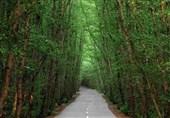 1.2 میلیارد تومان اعتبار به طرح جنگلکاری شهرستان سامان تخصیص یافت