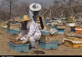 تولید عسل ارگانیک از ارتفاع 3 هزار متری کوهستانهای اردستان