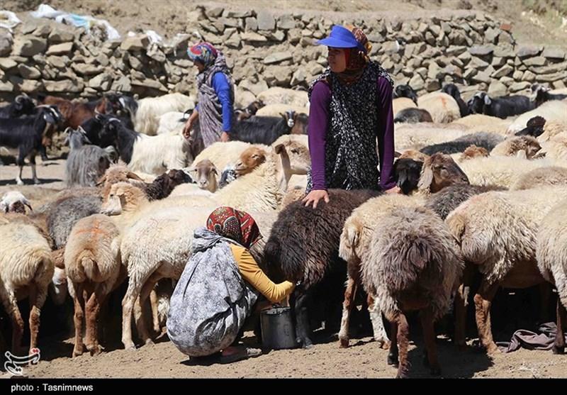 عشایر 13 درصد جمعیت خراسان جنوبی را تشکیل میدهند