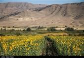 فرآیند صدور مجوز واردات نهادههای کشاورزی اعلام شد