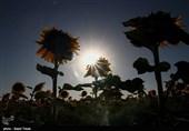 پیش بینی آبوهوای صاف و آفتابی کشور تا شنبه