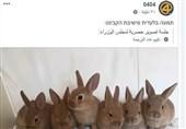 """""""حکومة أرانب"""".. صورة حکومة نتنیاهو فی الإعلام الإسرائیلی"""