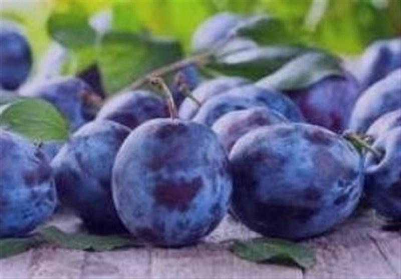 قیمت 2 تا 20 هزار تومانی انواع میوه در میدان مرکزی تهران + جدول