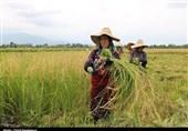 تأمین امنیت غذایی کشور راهبردی اساسی در استان گیلان است