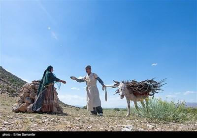 پدر خانواده دامداری و بردن گله به چرا را عهده دار است و زنان دوشادوش و همپای مردان کار میکنند و خم به ابرو نمی آورند.