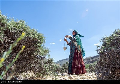 یک روز زندگی در کنار عشایر قشقایی- فارس