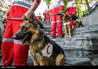 مانور سگهای زنده یاب هلال احمر در سطح شهر