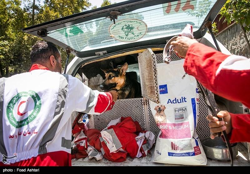 هلال احمر البرز به 610 نفر حادثه دیده در طرح تابستانه امدادرسانی کرد