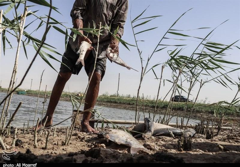 خوزستان| خشکسالی قاتل ماهیهای پرورشی خرمشهر