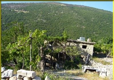 """""""کسب"""" السوریة.. رحلة بین الغابات"""