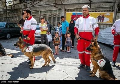 ہلال احمر کے کتے شہر کی سڑکوں پر حادثات میں زندہ بچنے والے لوگوں کو ڈھونڈنے کی مشقیں کر رہے ہیں۔۔