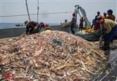 Iranian Fisheries Organization Says No License Issued to Chinese Fishermen