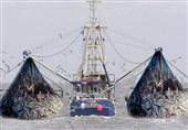 سازمان شیلات صدور مجوز ماهیگیری برای صیادان چینی را تکذیب کرد