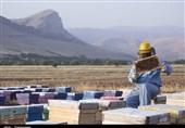 اردبیل|راهاندازی سامانه جدید زنبورستانها ممنوع شد