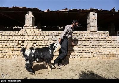 بازار فروش دام در آستانه عیدقربان - اصفهان