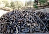 10 تن چوب جنگلی قاچاق در آمل کشف شد