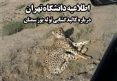 دانشکده دامپزشکی دانشگاه تهران اظهارنظر درباره علت مرگ یوز را تکذیب کرد
