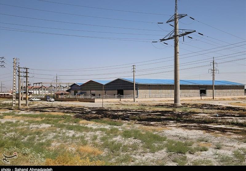 البرز| 200 هکتار از اراضی اطراف شهرک صنعتی اشتهارد درختکاری میشود