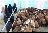 خیران سمنانی 1450 رأس گوسفند قربانی کردند