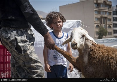 بازار دام کرج در عید قربان