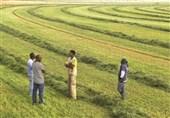 فعالیت کشاورزی ترکیه در سودان