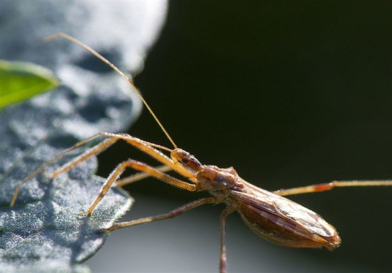 Medics Warn about Deadly Kissing Bug Disease as It Continues to Spread