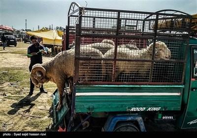 کشمیر کی مویشی منڈی کے خوبصورت اور دلکش مناظر