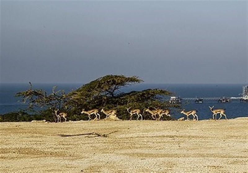 24 رأس پستاندار وحشی از طبیعت خراسانرضوی در یک ماه حذف شد
