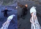 اکتشاف وحش بحری على شاطئ نیوزیلندا
