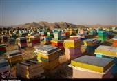 700 تن عسل در استان بوشهر تولید شد