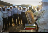 فیلم صادرات عسل در اردبیل رونق میگیرد