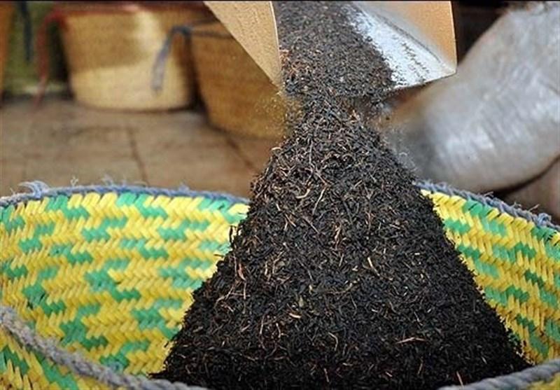 پیشنهاد کاهش سالانه 20 درصدی واردات چای برای حمایت از تولید داخل