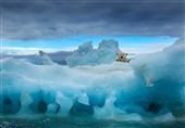 هدیهای برای دوستداران خرس قطبی + فیلم و عکس