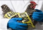 علماء یحذرون من انفلونزا قاتلة!
