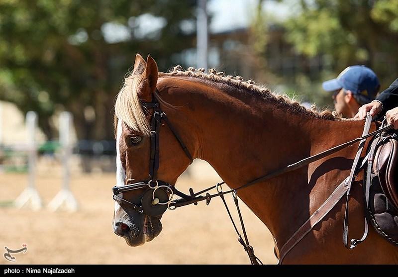 مشهد  نایب قهرمان جهانی سوارکاری: با اسب قرضی به مسابقات اعزام شدم