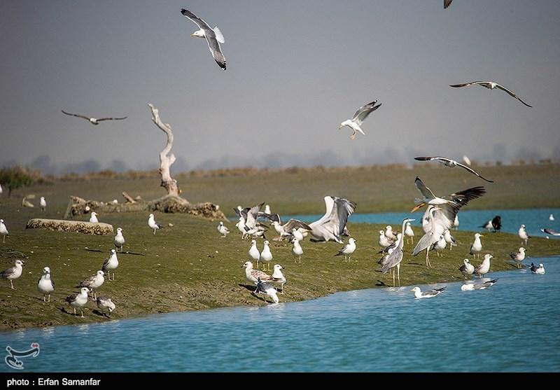 اصفهان| شناسایی و معدومسازی کانون آنفلوانزا در شهرضا